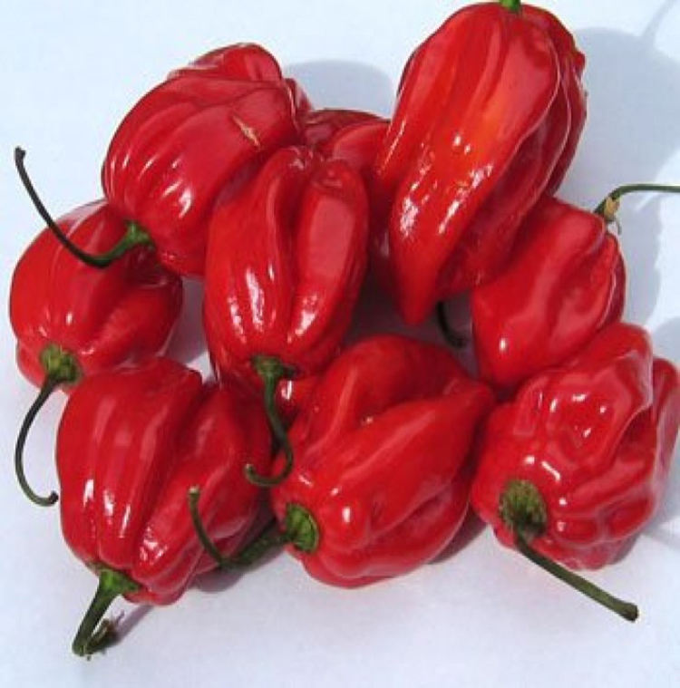 Wholesale Hot Habanero Peppers Frozen Bell With Good Price
