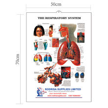 3D educational medical teaching human lung anatomy wall charts 3d medical poster