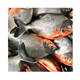 Frozen Red Pomfret Fish from China