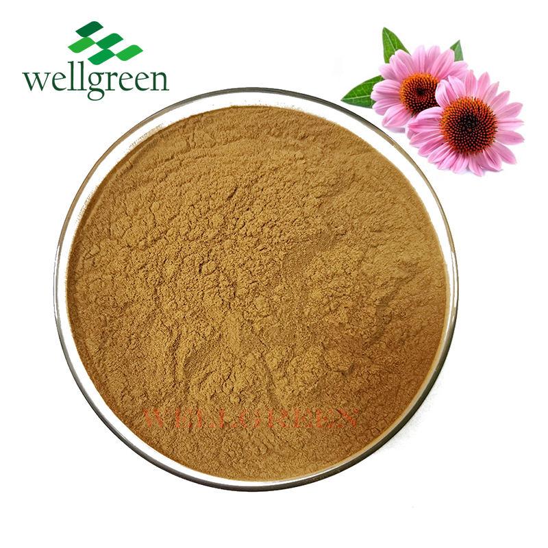 100% Natural Herb Extract Powder Echinacea Purpurea Angustifolia Extract 4% Chicory Acid Powder