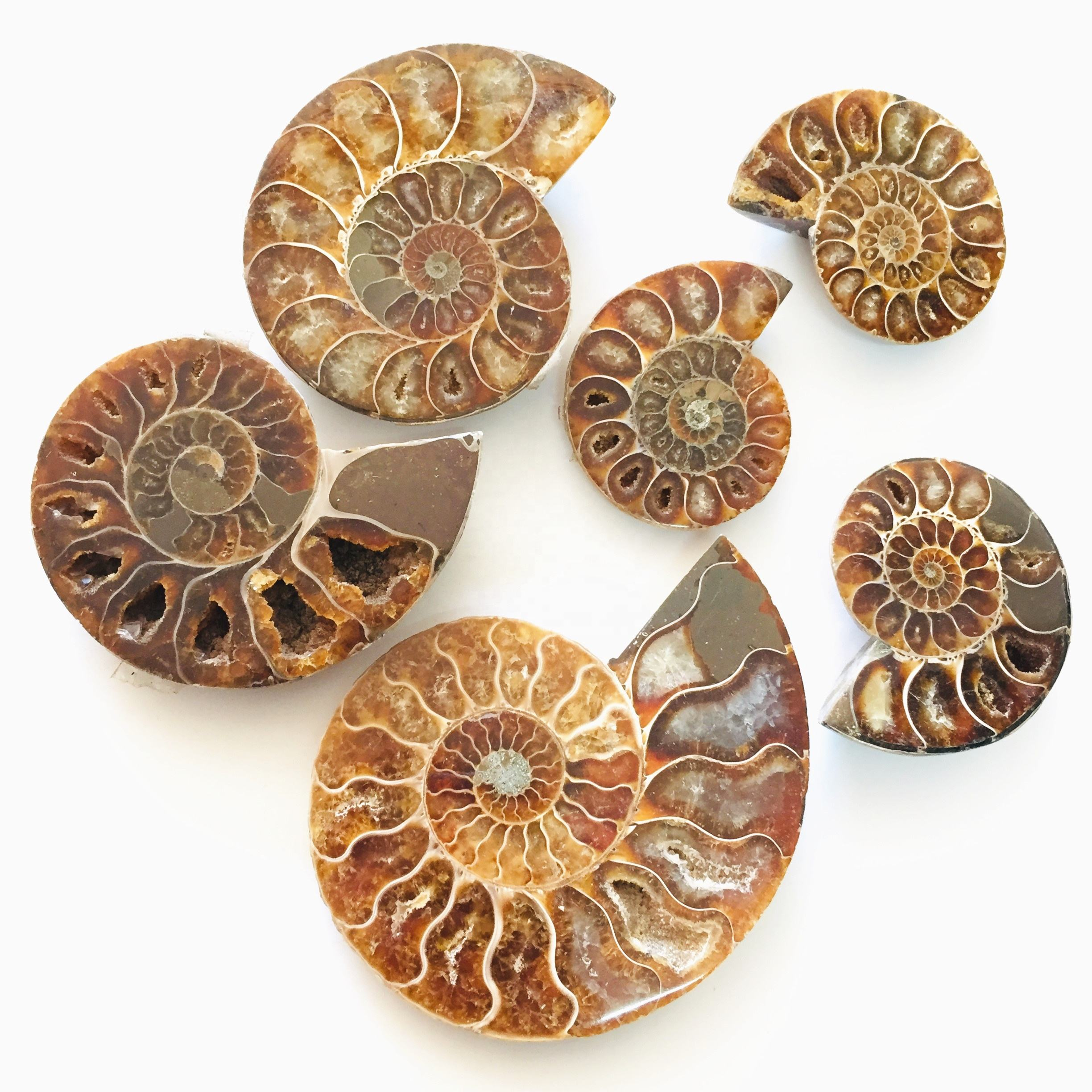 Natural Ammonite Fossil Mineral Specimen Slice Snail Conch Fossil For Decoration
