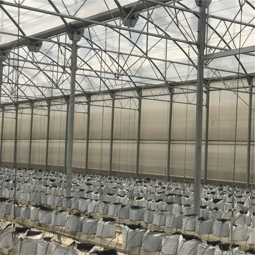 The Cheapest and Easily Installed Agricultural/ Commercial Green House