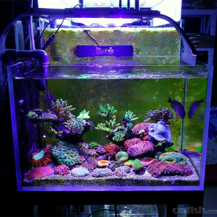 High Quality Freshwater Saltwater Fish Tank Used Marine Coral Reef Aquarium LED Lighting Moonlight