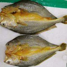 Frozen High Quality IQF Yellow Croaker Butterfly For Sale