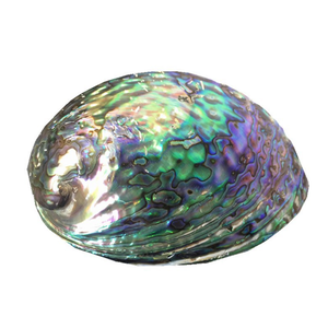 hot sale modern home craft handmade mexican new zealand abalone shell pieces for crafts