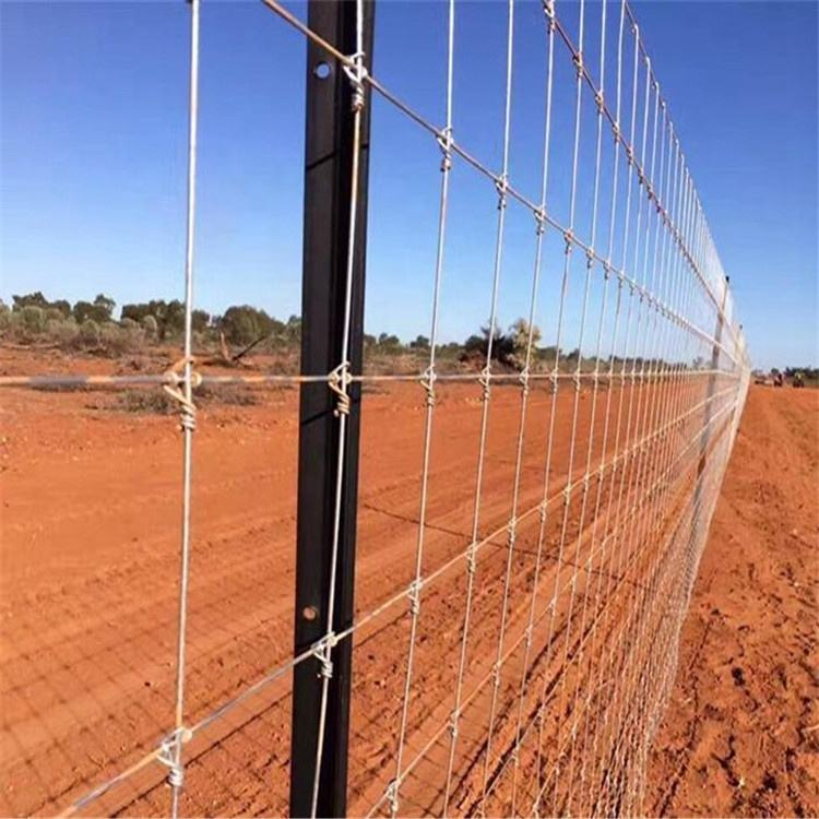 Ranch Used 2.5mm Galvanized Steel Fixed Knot Cattle Field Wove Wire Fence