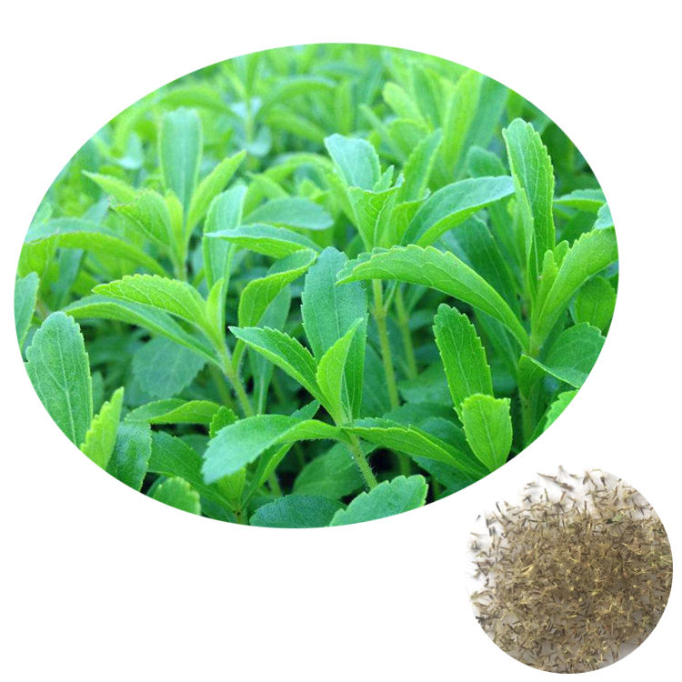Guarantee Germination 2020 Chinese Vegetable Sugar Plant Stevia Seeds