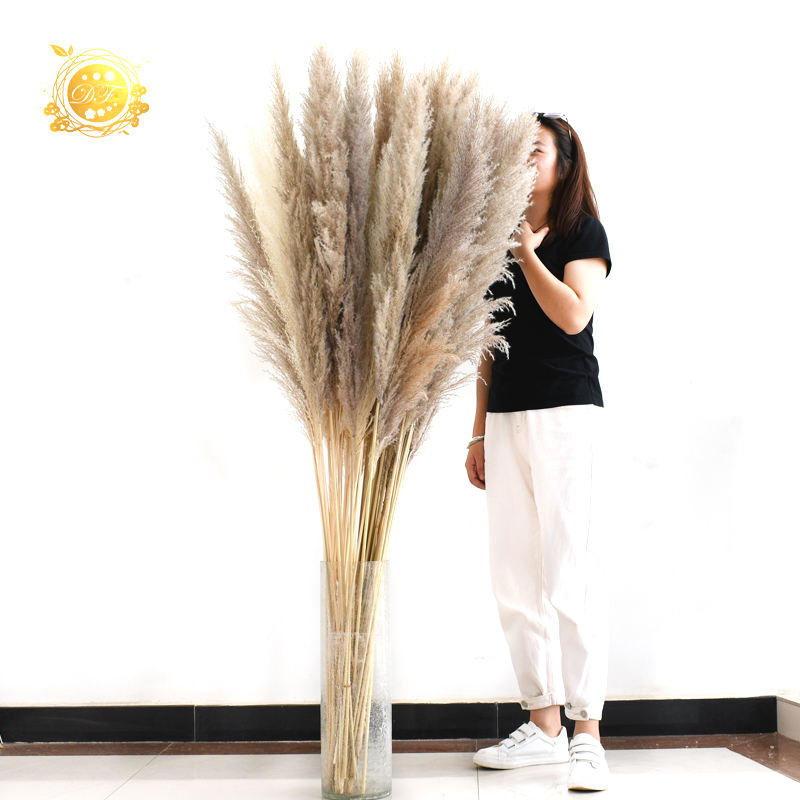 Beautiful decoration Natural Dried flowers Pampas Grass as gift