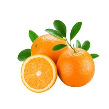 Low Price For Fresh Orange Fruit Wholesale Valencia Navel Orange