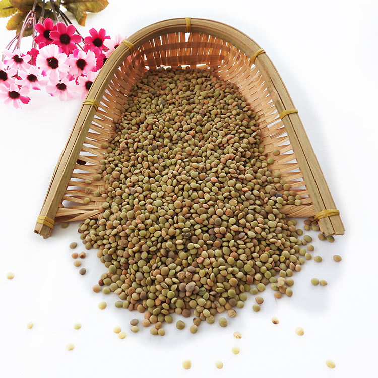 Non Canada Lentils Chinese Lentils top quality Green lentils