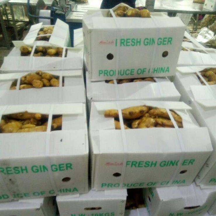 Hot Sale Organic Fresh Ginger price High Quality Fresh Ginger
