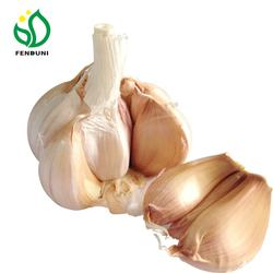 white natural garlic
