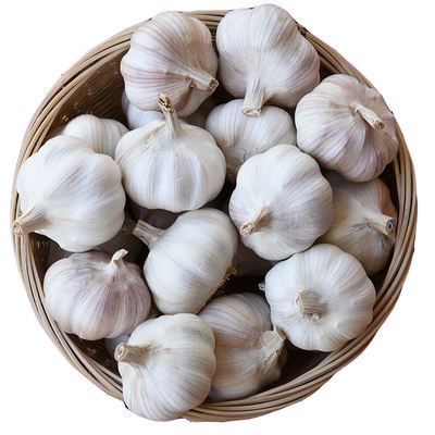 Fresh single garlic normal white garlic from best supplier China exporters