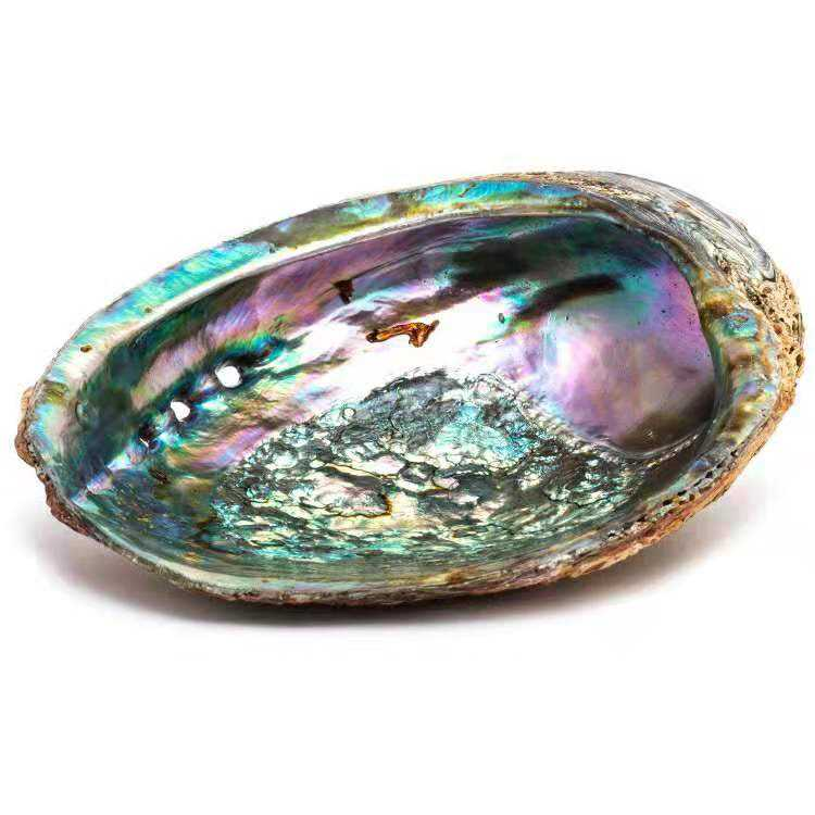 Wholesale Initial Necklace Beautiful Shiny China Abalone Shell