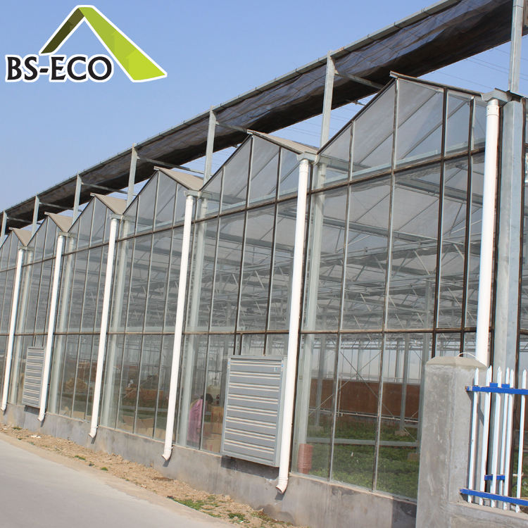 Glass Cover Material and Beautiful,Economic Interest Features Large Greenhouse Price