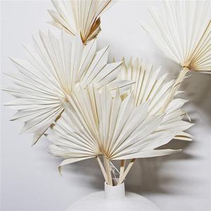 T04286 Boho Floral Decoration Tropical Red White Pink Shades Mini Fan Dry Palm Leaves Dried Palm Leaves For Wedding Decor