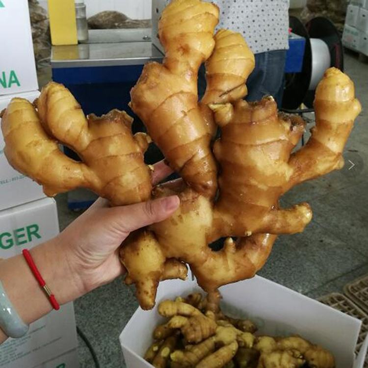 China best quality wholesale fresh ginger