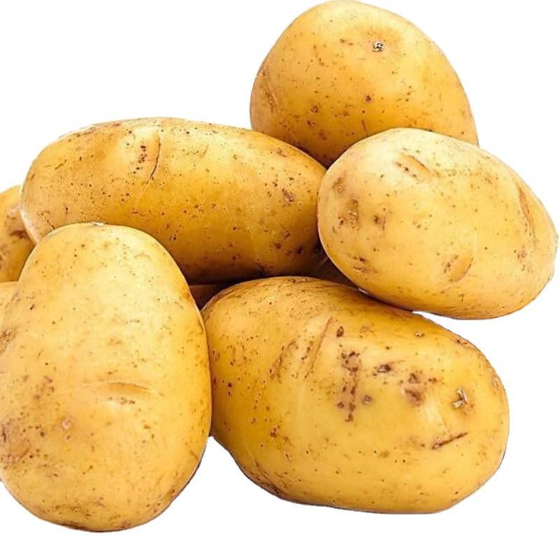 organic fresh sweet yellow potato seeds