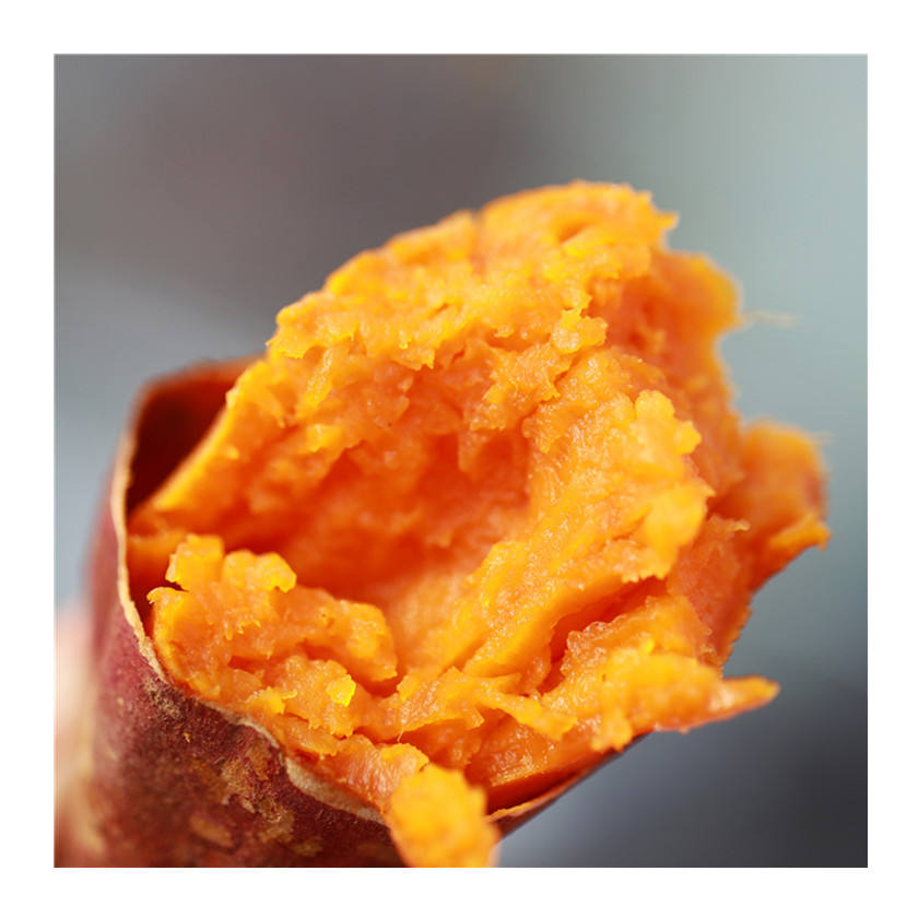 Yunxi sweet potato artificially cultivates sweet glutinous and delicious sweet potato