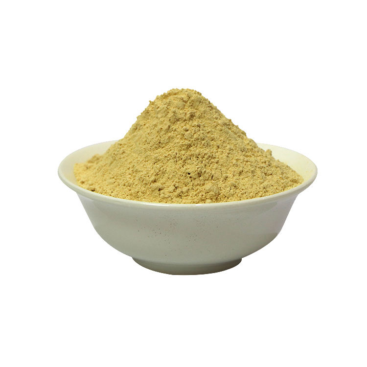 Herbal Plant Extract Powder Hericium Erinaceus Mushroom Extract Powder