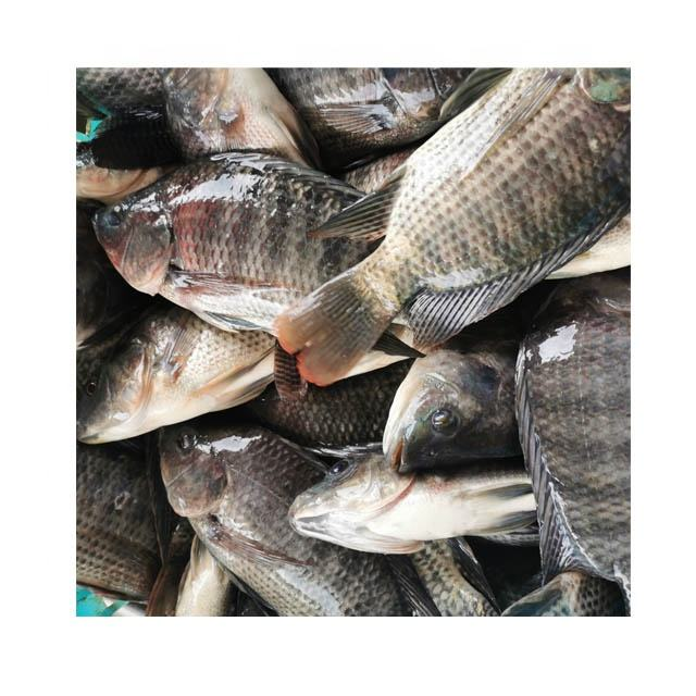 Fish Feed For Tilapia
