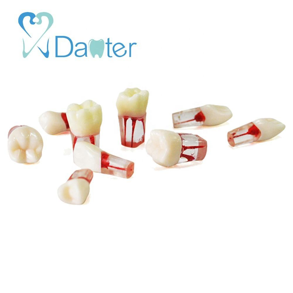 Dental Root Canal Teeth Endodontic Training Block for Practice