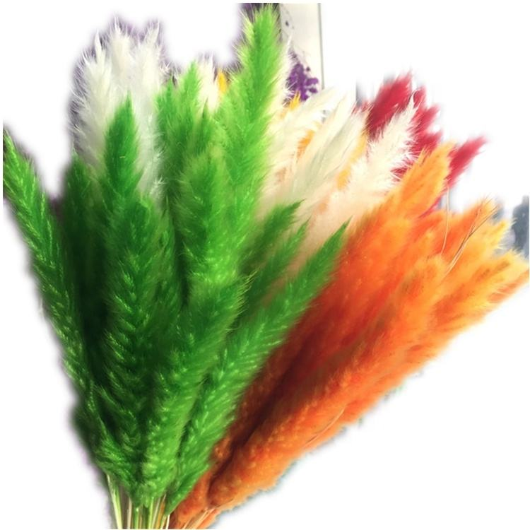 QSLH-DFE017 Little Pampas Dried Decorative Pampas Grass for Wedding