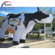giant inflatable cow for advertising