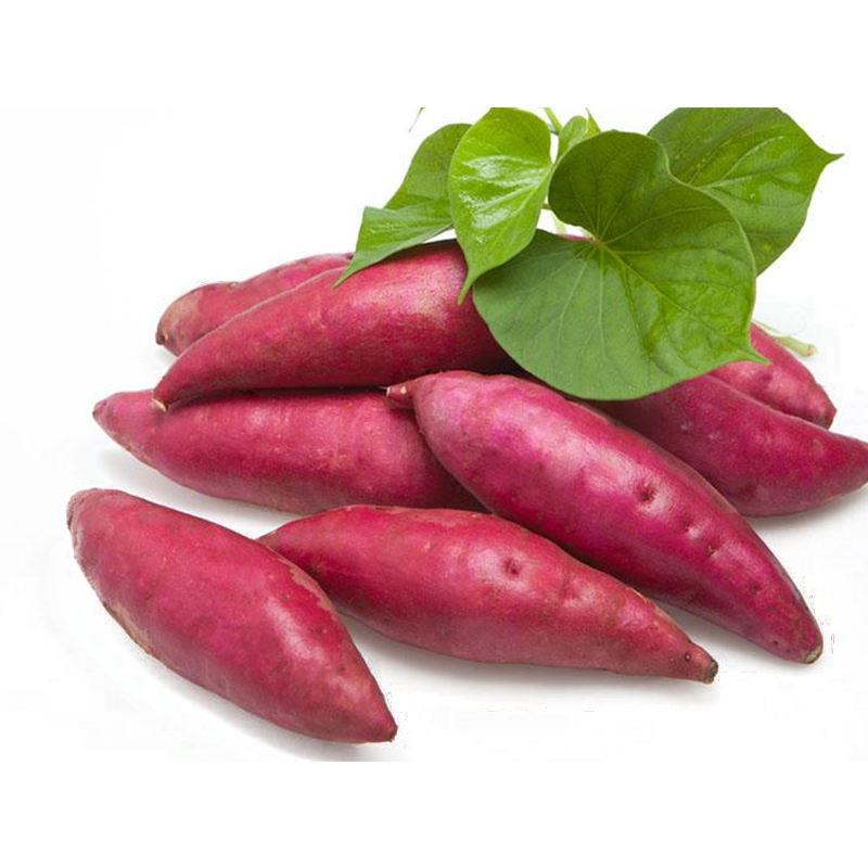 China origin 2020 fresh sweet potato for sale