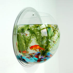 Hanging Wall Mounted Betta Fish Tank Aquarium Wall Decor Plant transparent Plastic Fish Tank