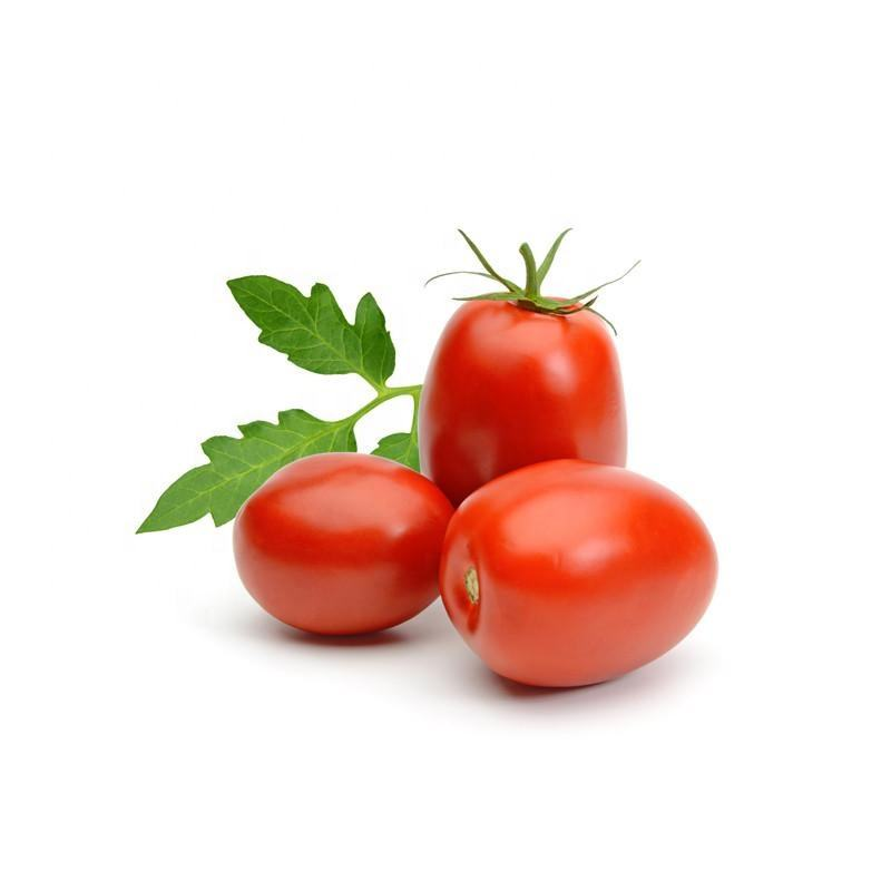Mexico Grown Fresh Red Tomato Roma Robinson Fresh MOQ 10 pieces Quick Delivery in US