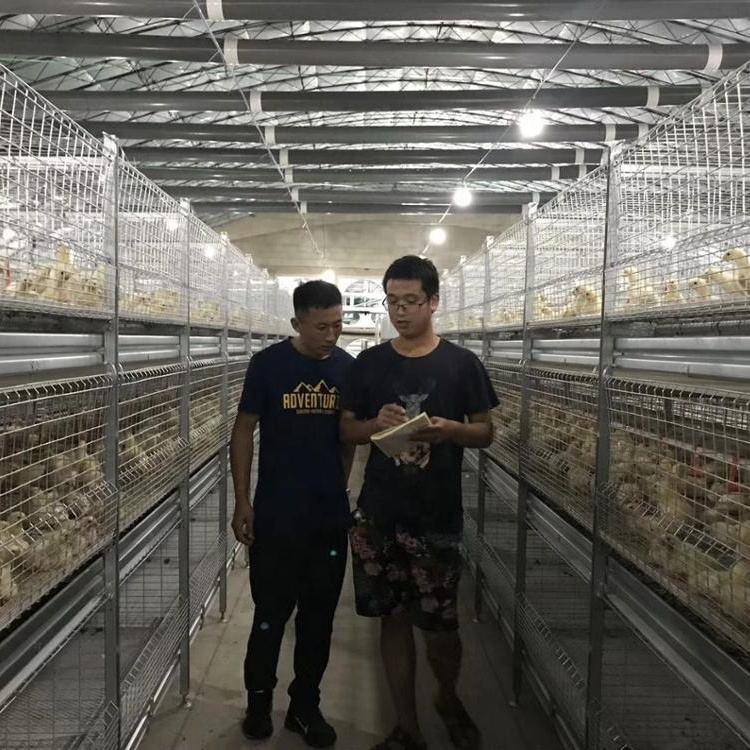 Automatic Chicken layer Cages with Manure Cleaning System for Broiler Chicken Feed