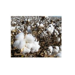Available Bulk Raw Cotton/Cotton Linter From Phillippines For Sale