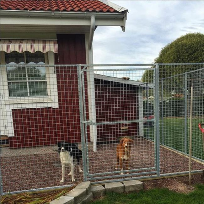 Large Pet Dog Run Kennel