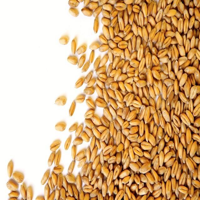 Nzac Wheat