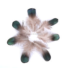 natural green color diy pheasant pluma lady amherst pheasant feather