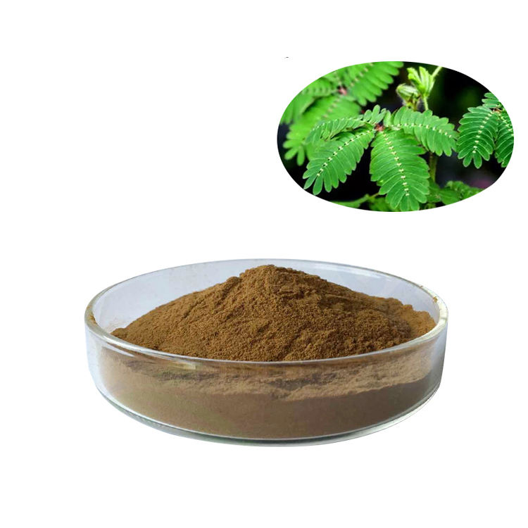 Hot sale Mimosa pudica/ Mimosa Pudica Extract Powder