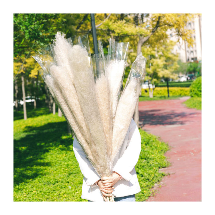 Hot New Products Pampas Grass Dried Pampas Grass Natural Flower Pampasgras