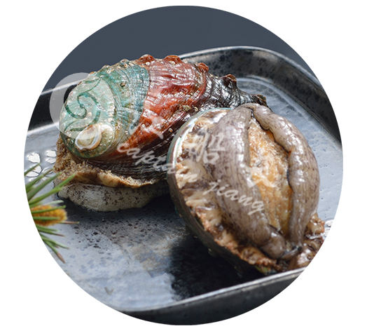 FROZEN ABALONE IN SHELL