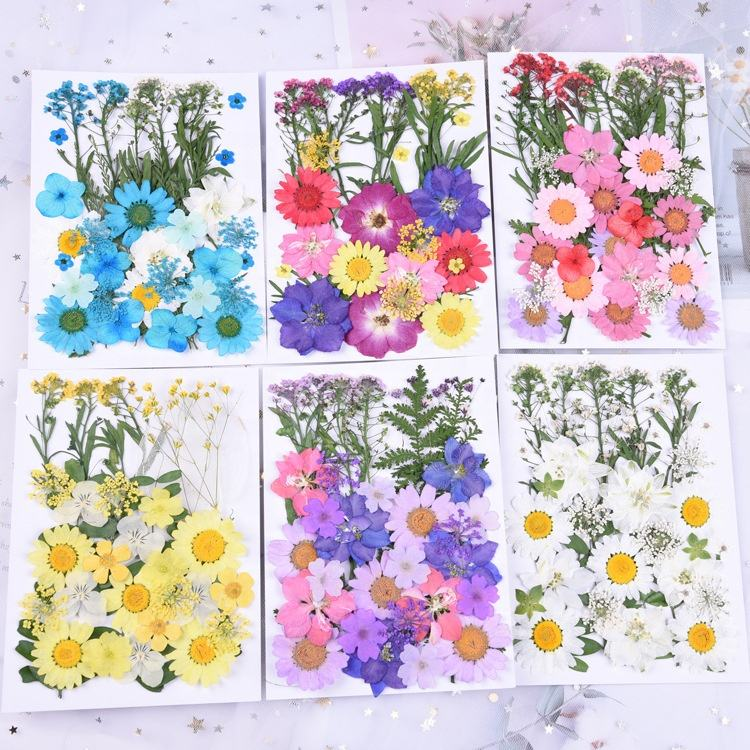 A-1447 Colorful DIY Real Dried Pressed Flowers Wholesale