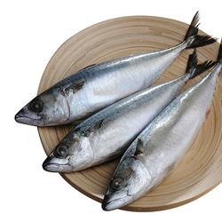 Frozen Horse Mackerel for sale