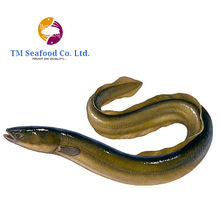 A Grade Frozen EEL Fish in Cheap Price from Bangladesh