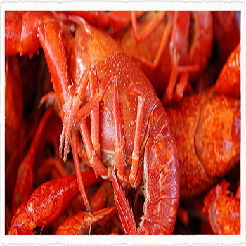 High Quality Frozen CrayFish For Sale