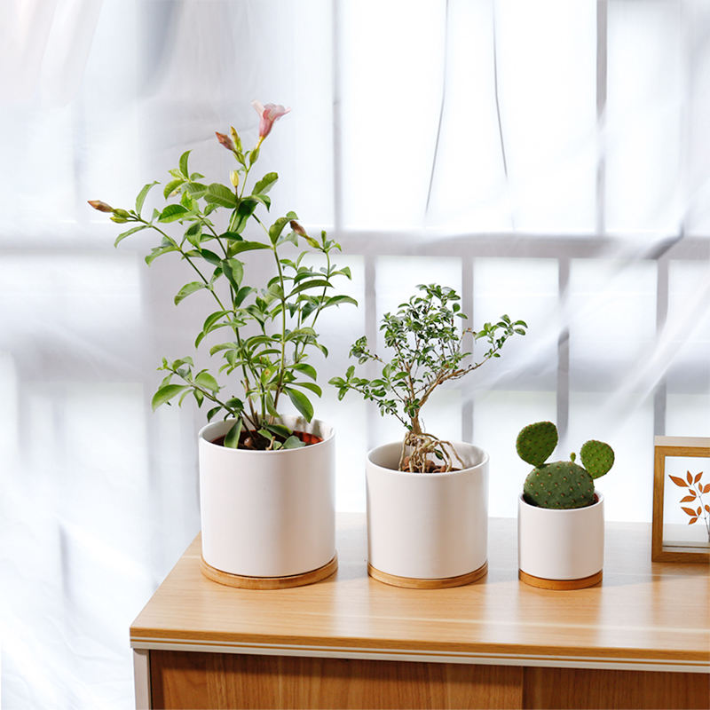 Wholesale customized nordic cylinder ceramic flower plant pot indoor porcelain crafts garden pots with bamboo tray stand