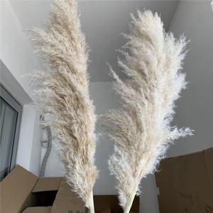 V-3245 Hot Seller September Shopping Festival White Natural Dried Pampas Grass For Wedding and Home