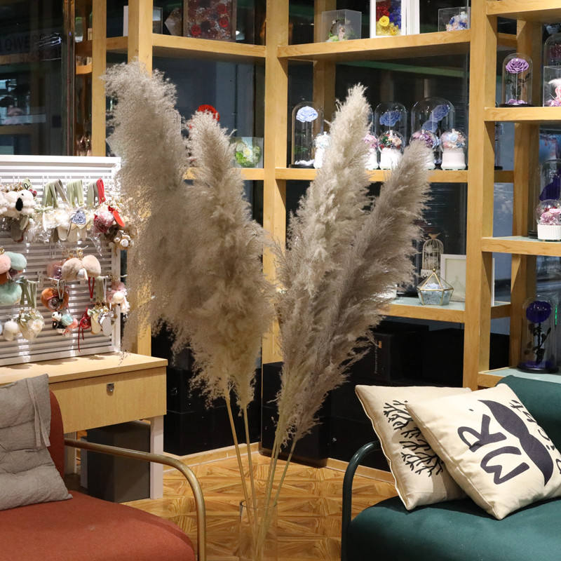 wholesale large natural dried flower long stem dry grey Pampas Grass for home decoration