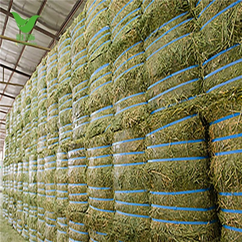 Animal Feeding Timothy or alfalfa hay in bales for sale for wholesale