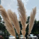 X224 Wedding Home Decor Dark Grey White Pink Big Large Giant Tall Long Natural Dry Reed Flower Dried Preserved Pampas Grass