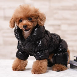 Fashion Solid Color Winter High Collar Padded Pet Down Jacke