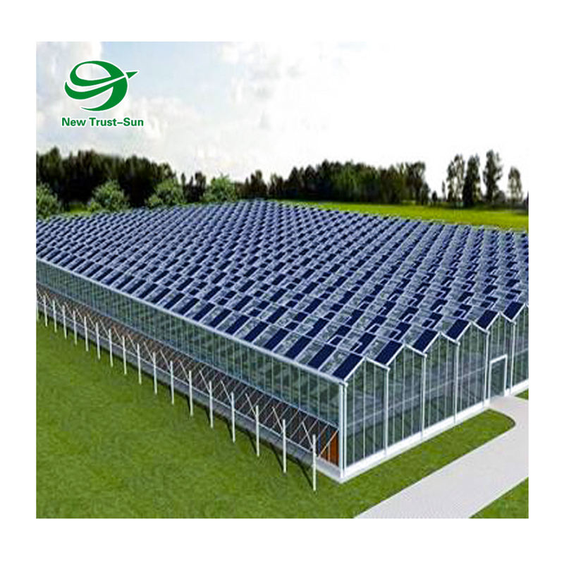 Hydroponic Venlo polycarbonate Energy Drive Photovoltaic Panel Solar Greenhouse